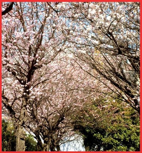 青山は、「春が来た!」。_e0236072_22475084.jpg