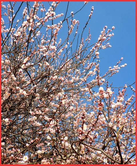 青山は、「春が来た!」。_e0236072_22531677.jpg