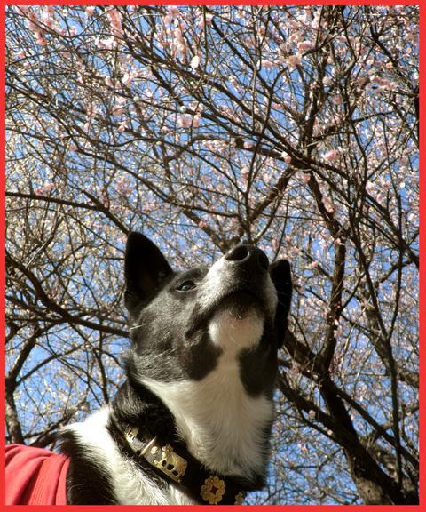 青山は、「春が来た!」。_e0236072_22564546.jpg