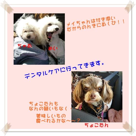 b0104592_17243243.jpg