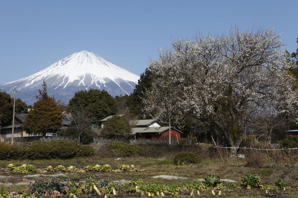 里の春 [Spring of the village]_b0064396_18242732.jpg