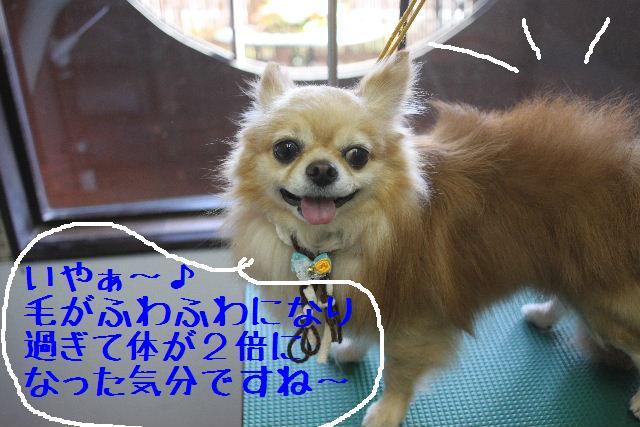 b0130018_364569.jpg