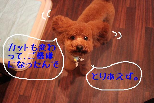 b0130018_383963.jpg
