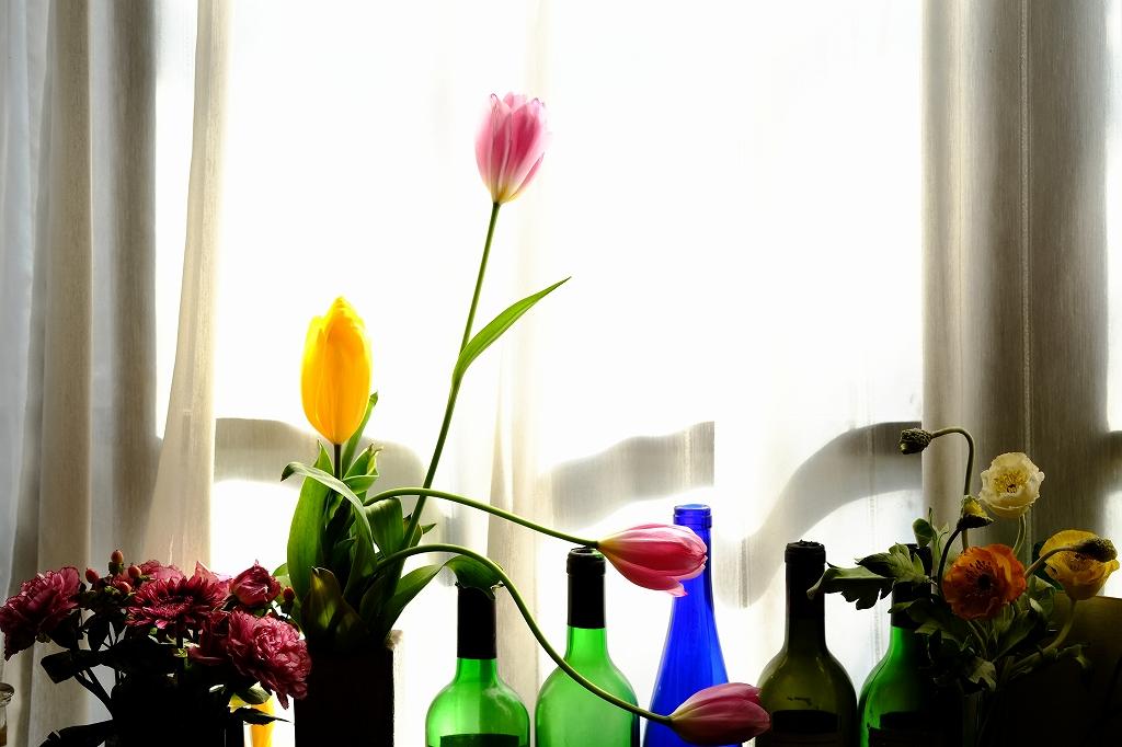 春が来た_f0050534_8534920.jpg