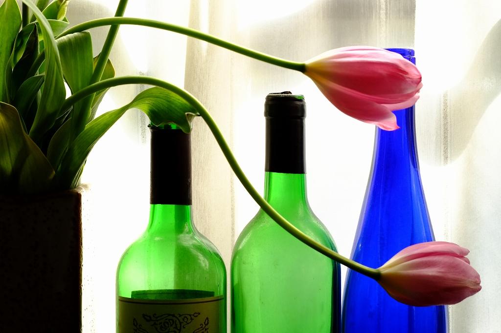 春が来た_f0050534_9103667.jpg