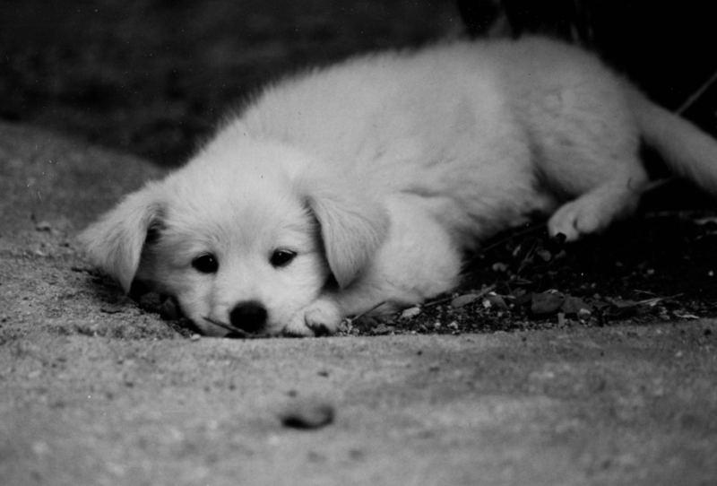 子犬のクリス_e0053660_2044969.jpg