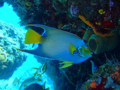 カンクンツアーコスメル編 カリブ海の魚たち COZUMEL/ MEXICO_e0184067_12494156.jpg
