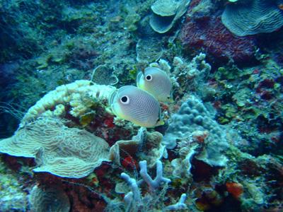 カンクンツアーコスメル編 カリブ海の魚たち COZUMEL/ MEXICO_e0184067_1249493.jpg