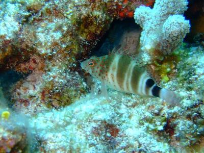 カンクンツアーコスメル編 カリブ海の魚たち COZUMEL/ MEXICO_e0184067_12503929.jpg