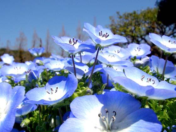 もう、春!ですよ~。お出かけは、明るいカラーの服!で~、ハハハーー。_d0060693_19464553.jpg