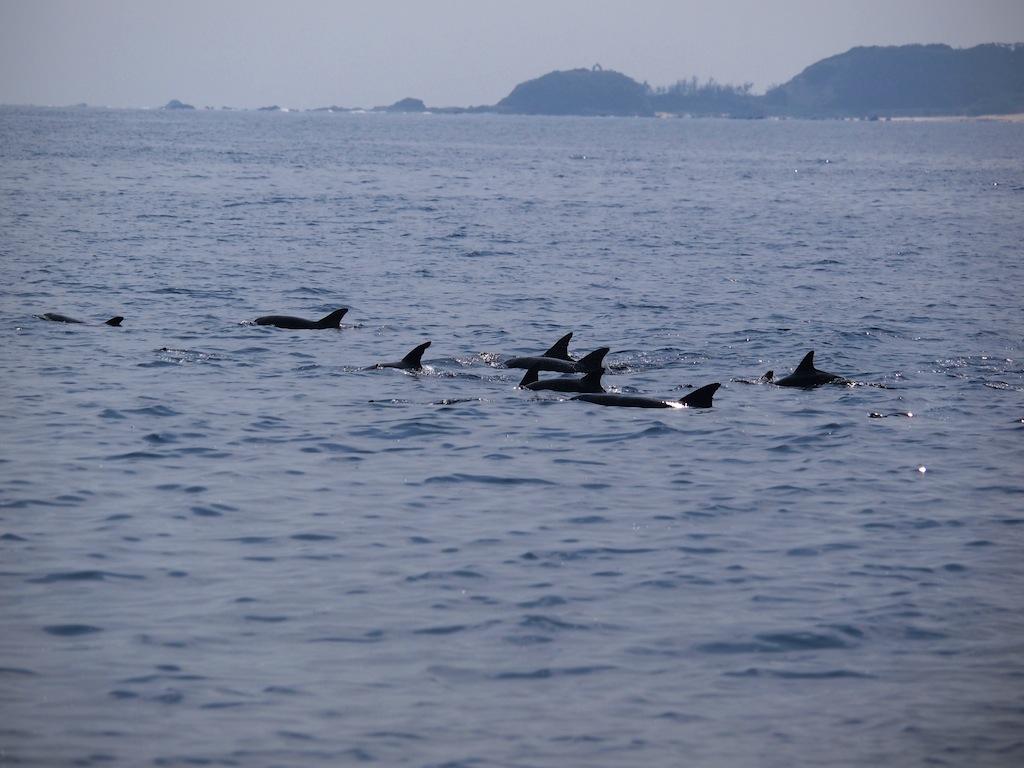 3/6 ザトウクジラ全島一斉調査_a0010095_19491892.jpg