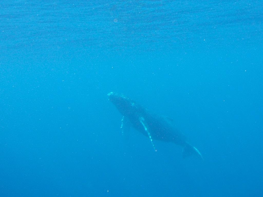 3/6 ザトウクジラ全島一斉調査_a0010095_1949344.jpg