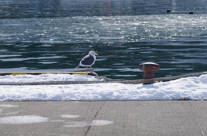鳥見んぐ        道東シリーズ 10_b0103798_5235281.jpg