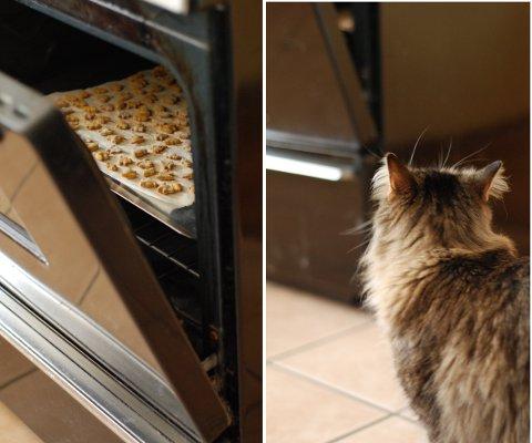 猫のオヤツクッキー 改良レシピ&コツ_b0253205_5544730.jpg