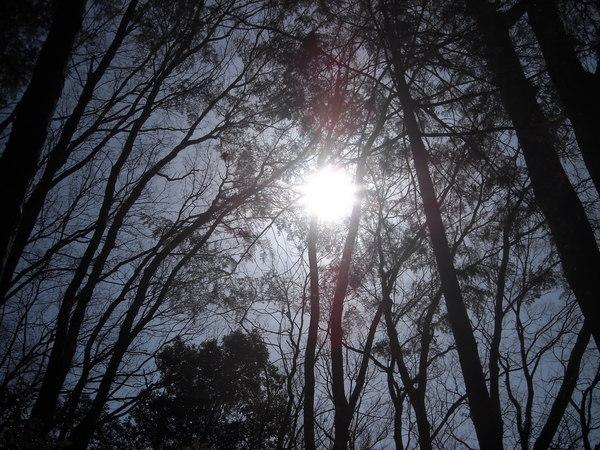 参道のお陽さま_c0141013_8453130.jpg