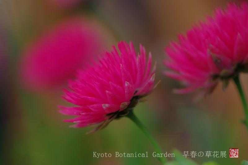 Kyoto Botanical Garden_a0157263_0324072.jpg