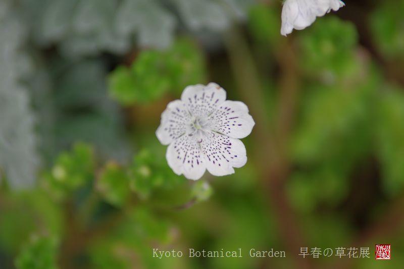 Kyoto Botanical Garden_a0157263_0325029.jpg