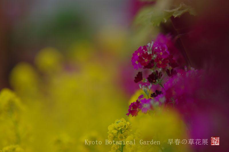Kyoto Botanical Garden_a0157263_0325999.jpg