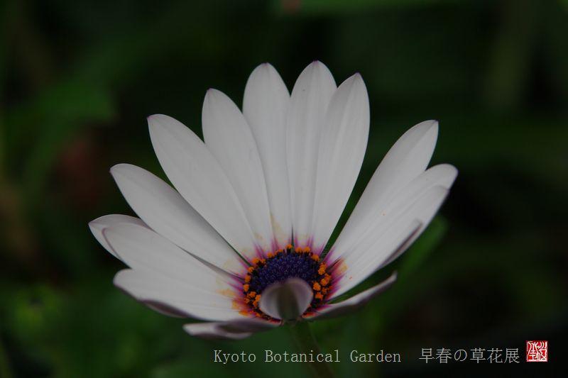 Kyoto Botanical Garden_a0157263_0331381.jpg