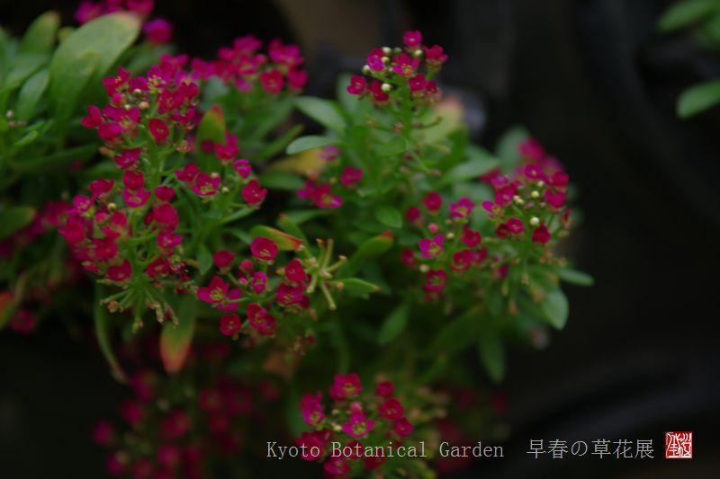 Kyoto Botanical Garden_a0157263_0332080.jpg