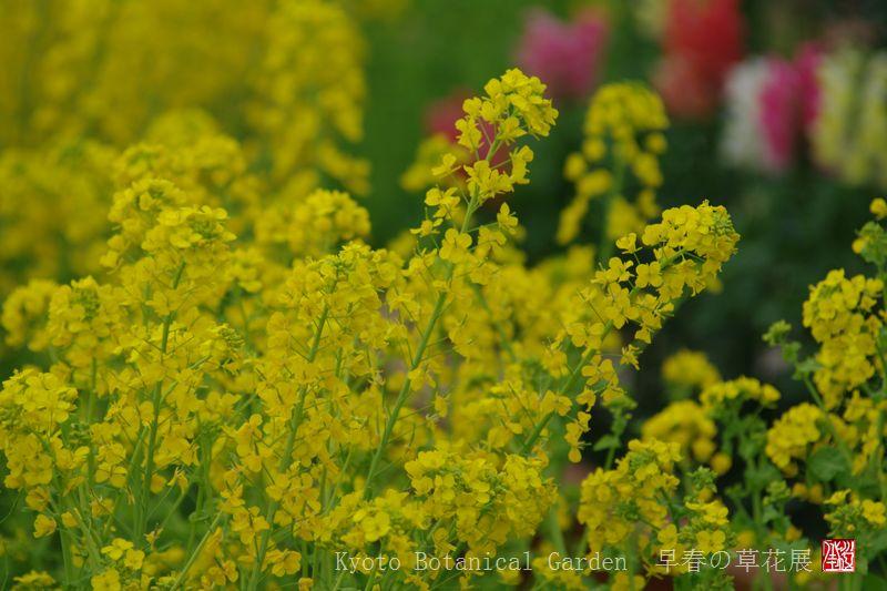 Kyoto Botanical Garden_a0157263_0333031.jpg