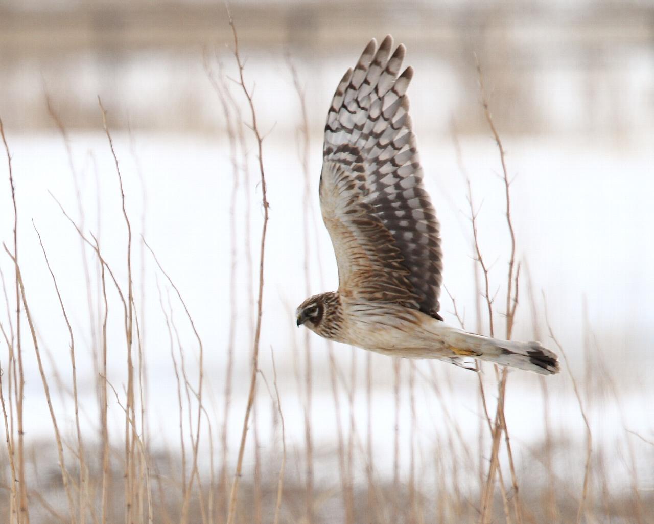 北国の猛禽パラダイス_f0105570_2152823.jpg