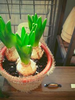 今週の鉢物さん_b0209477_14485584.jpg