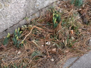 春を見つけた。_d0027486_1719172.jpg