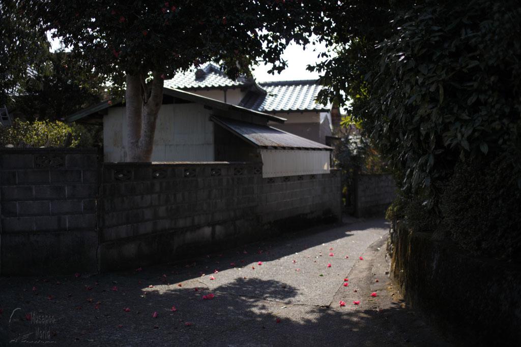 ツバキ [Camellias]_b0064396_19232377.jpg
