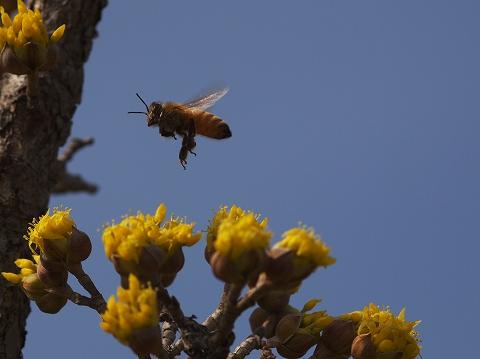 春を探しに・・・_c0077531_16393535.jpg