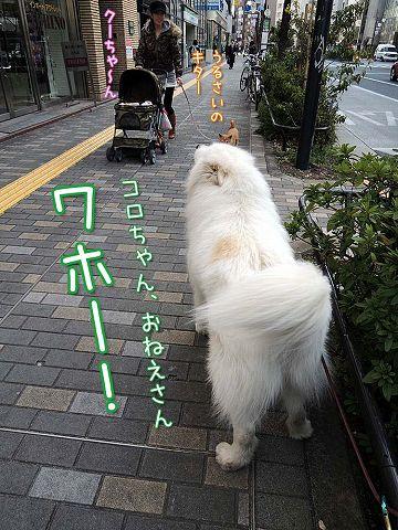 続・カーネル&初物_c0062832_6284070.jpg