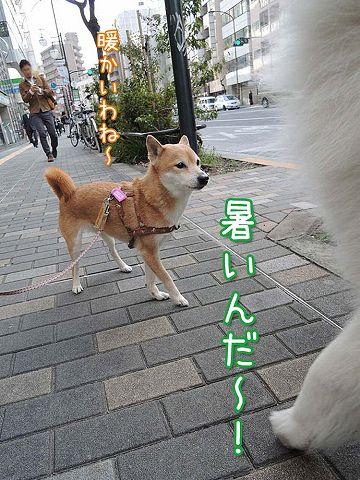 続・カーネル&初物_c0062832_6284570.jpg