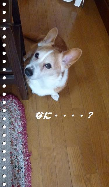 f0184055_9291556.jpg