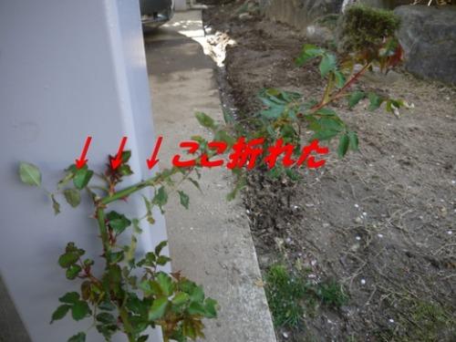 c0283778_1611964.jpg