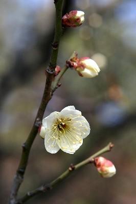 すっかり春の陽気でした。_e0190287_18165072.jpg