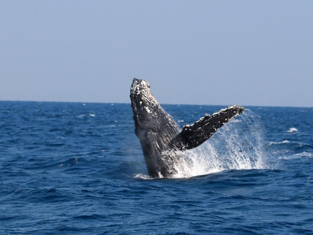 3/7 名瀬海域クジラ調査_a0010095_11432851.jpg