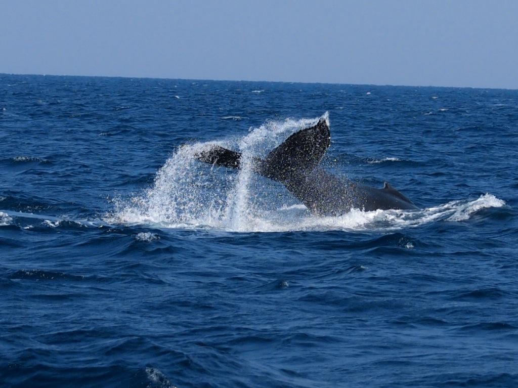 3/7 名瀬海域クジラ調査_a0010095_11434572.jpg