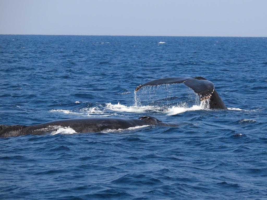 3/7 名瀬海域クジラ調査_a0010095_1144242.jpg
