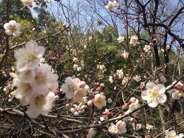 土曜の朝(^^♪ 春のお知らせ♪_a0213806_20381476.jpg