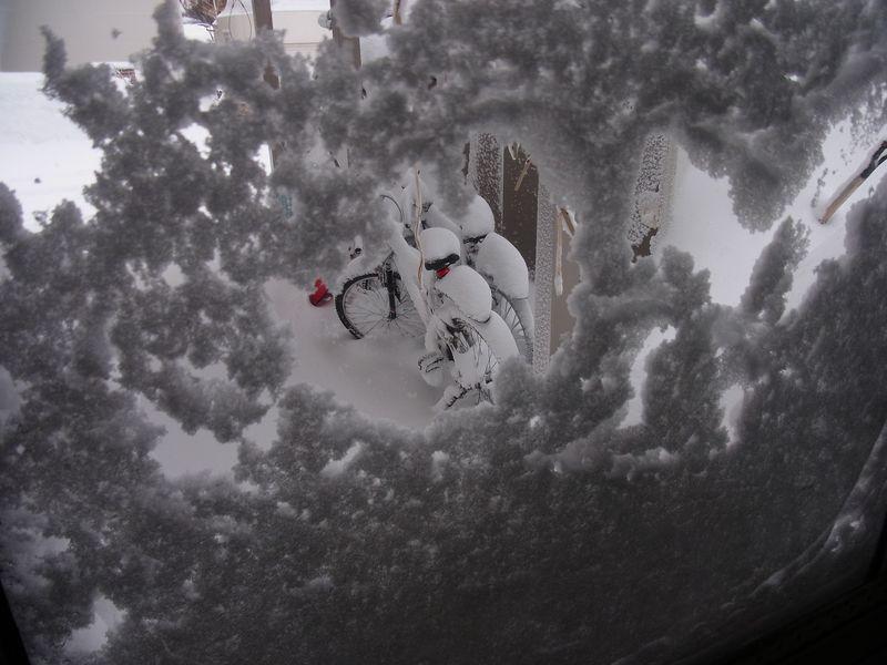 暴風雪ふたたび_c0025115_6364740.jpg