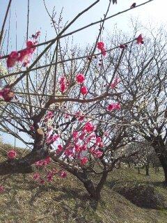 春の日・・・♪3/9②_b0247223_20284216.jpg
