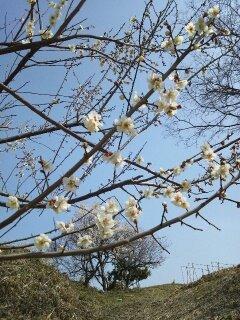 春の日・・・♪3/9②_b0247223_20284717.jpg