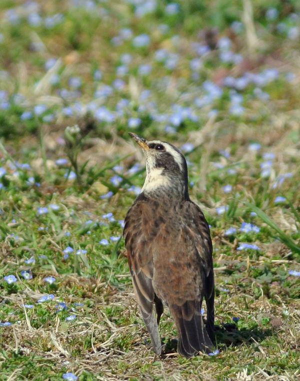 川原で鳥見_e0089232_15101029.jpg