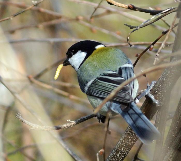 川原で鳥見_e0089232_151124.jpg
