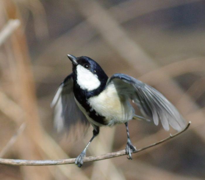 川原で鳥見_e0089232_15115715.jpg