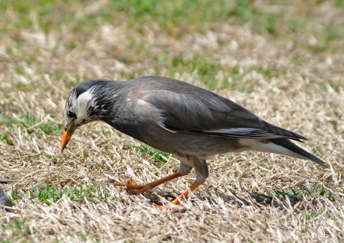 川原で鳥見_e0089232_15123897.jpg