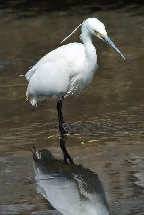 川原で鳥見_e0089232_1585153.jpg