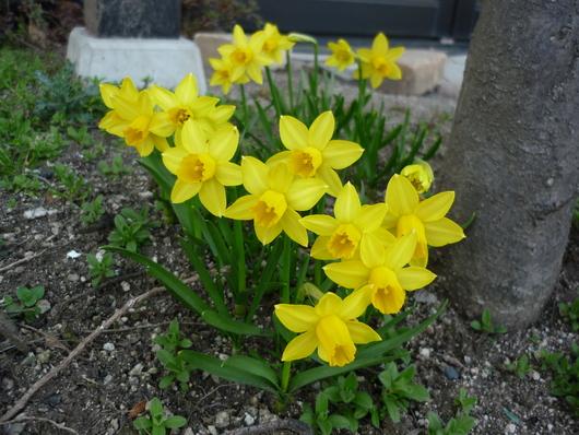春の訪れ・・・_f0166439_18401924.jpg
