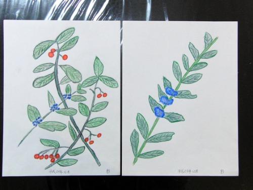 色鉛筆画 ~ O様 植物展 ~_e0222340_15133092.jpg