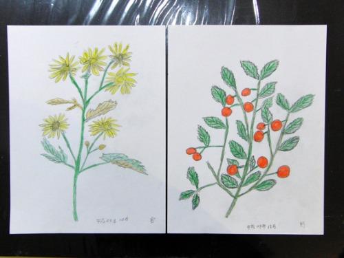 色鉛筆画 ~ O様 植物展 ~_e0222340_15151637.jpg
